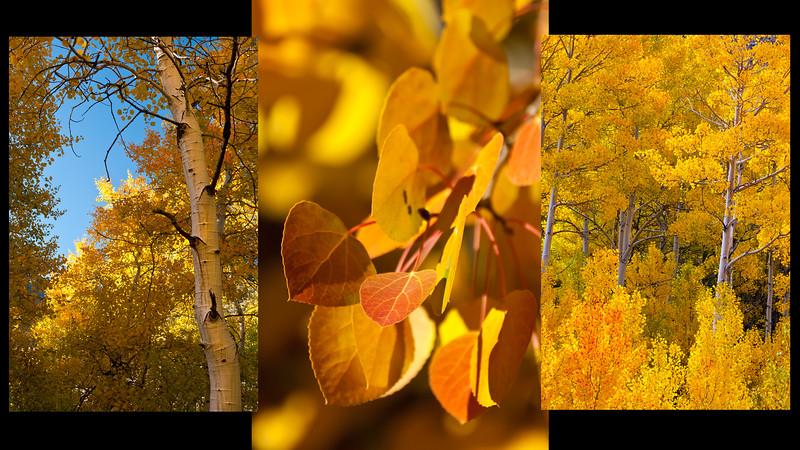 Fall Aspen Collage