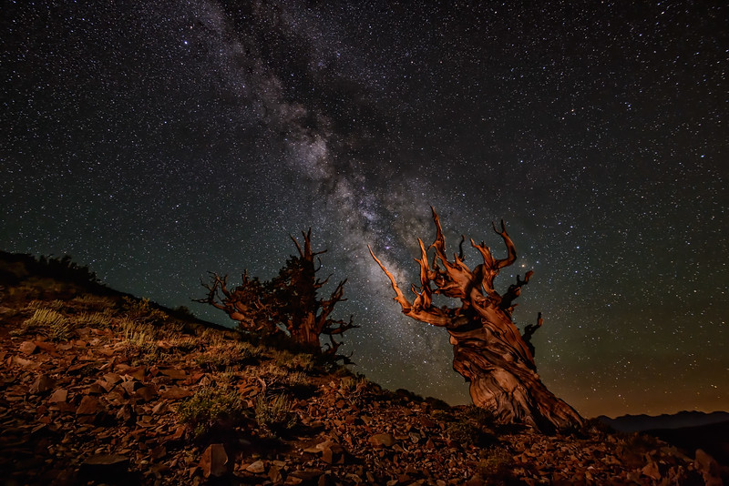 Ancient Bristlecones with Milky Way