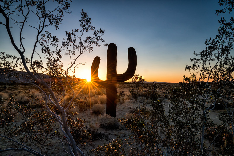 Saguaro at Sunrise