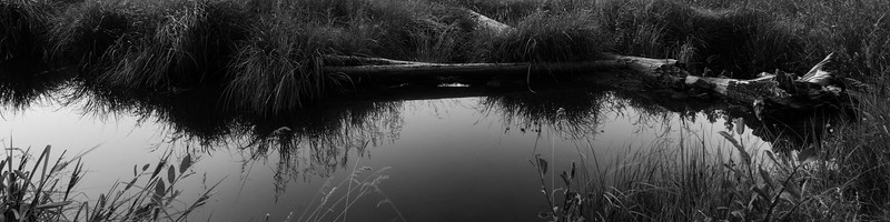 20160910_KW_LN_CottonWood_Beaver_Ponds