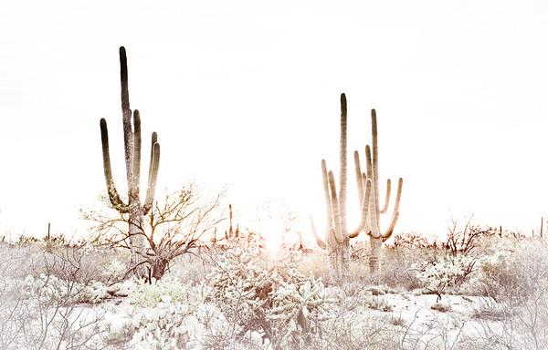 20160315KW_LN_Saguaro Park Sunset-Edit