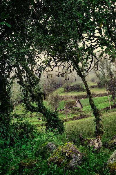 20140620_KW_LN_Hills of Pillaro