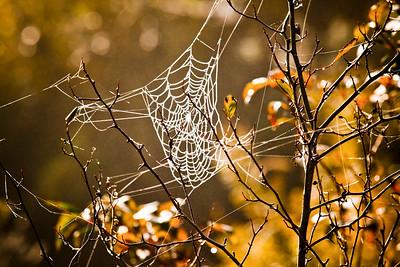Spider's Web - $25