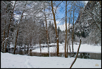 Merced River Winter Cottonwoods