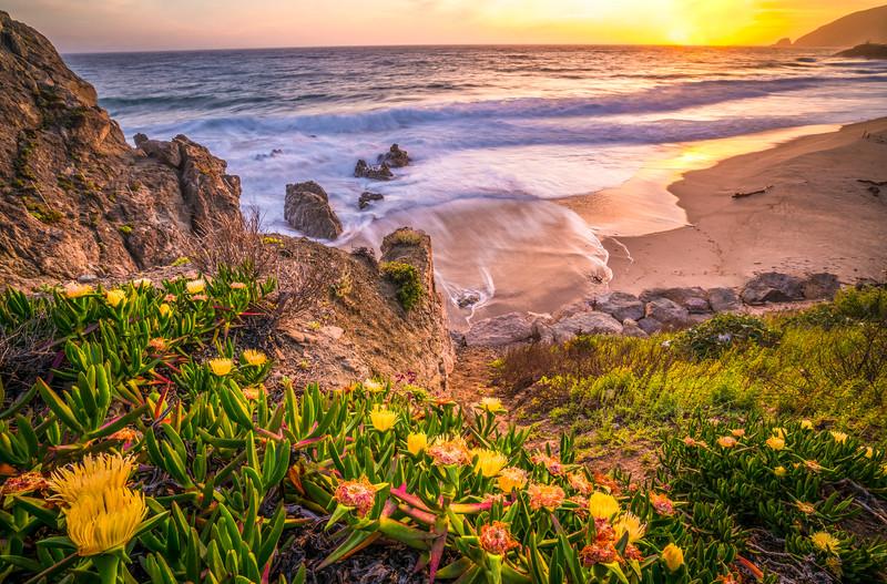 California Superbloom Sunset, Malibu