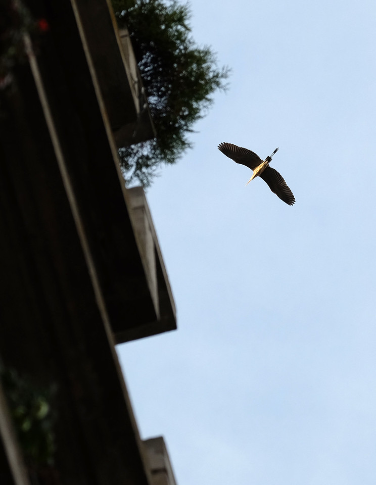 Heron at the Heron House