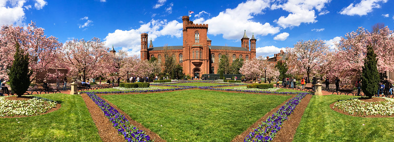 Smithsonian Castle with blooming magnolias 1