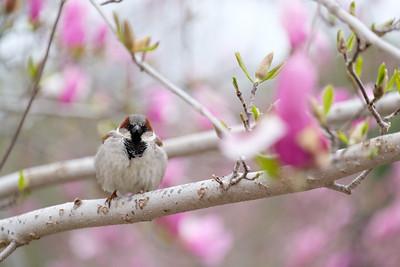 Bird at springtime in DC