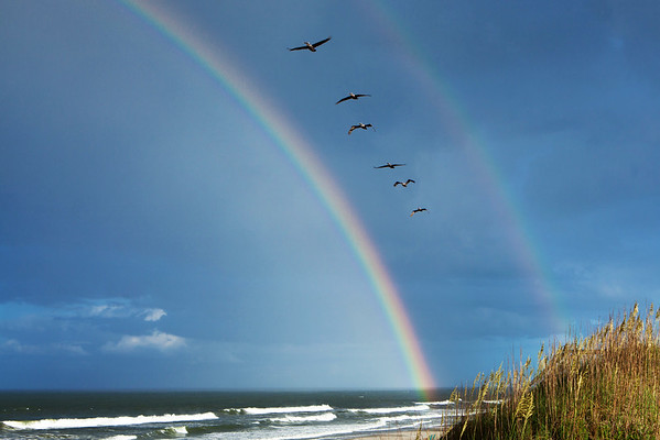 Pelicans in a double rainbow
