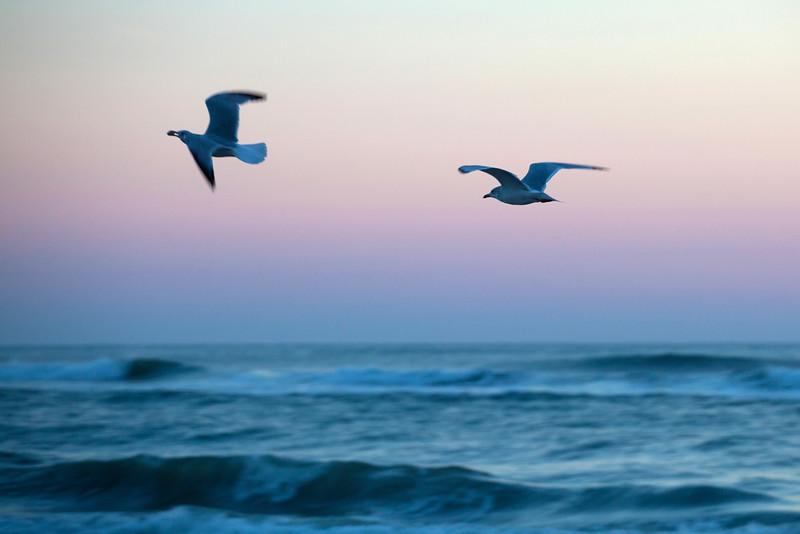 Seagulls just before sunrise