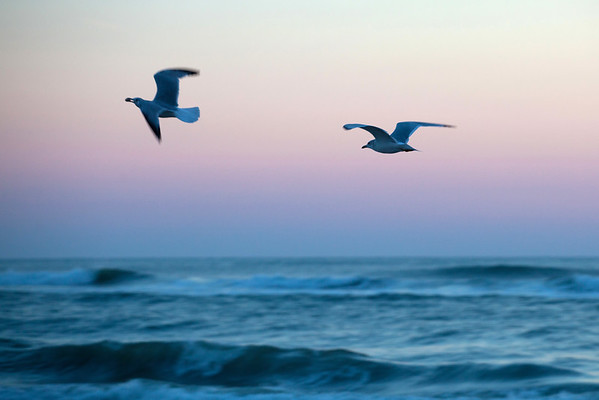 Seagulls just before sunrise
