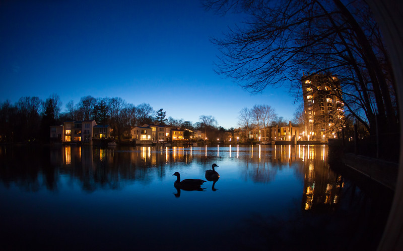 Lake Anne geese at twilight