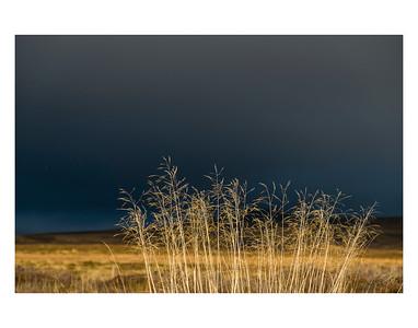 Untitled Grasses