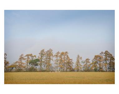 Untitled Trees
