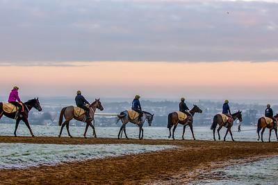 Newmarket Gallops