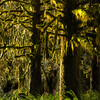 Light in a Mossy Forest