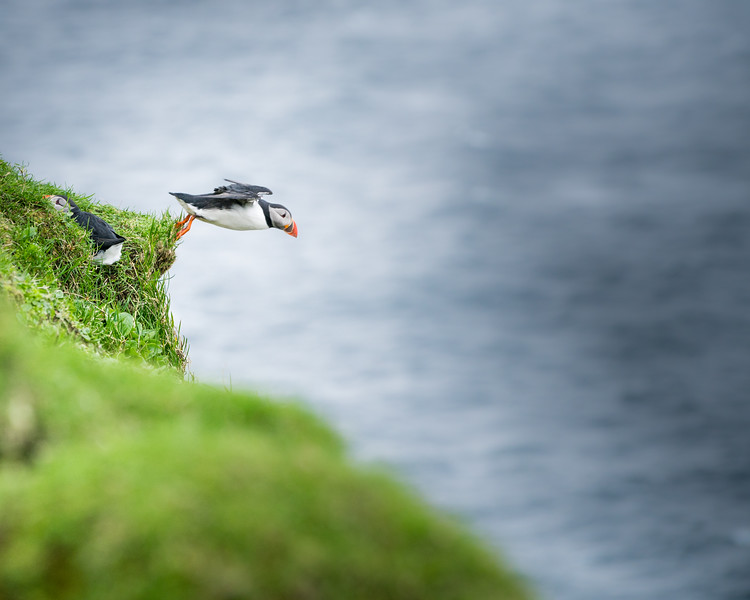 The Puffin Plunge
