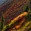 Avalanche of Fall Color