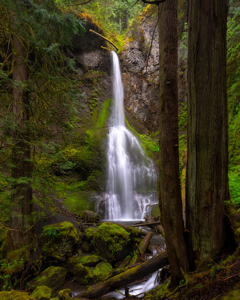 Waterfall in a Primeval Rain Forest