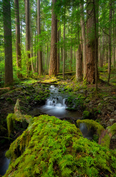 Small Stream in a Hemlock Forest