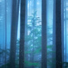 Young Tree in a Foggy Forest
