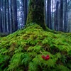 Red Berries on the Forest Moss