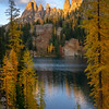 Lakeside Larches turning Gold