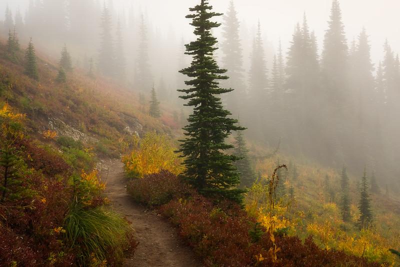 Naches Loop Trail in the Fog
