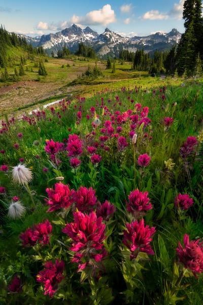 Wildflower Rapture