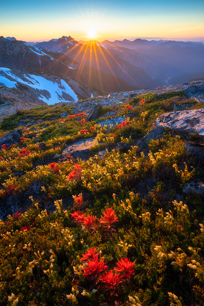 Indian Paintbrush Sunset