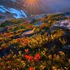 Indian Paintbrush Sunset