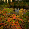 Peaceful feeling by an Autumn Pond