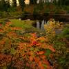 Peaceful feeling by an Autumn Pond