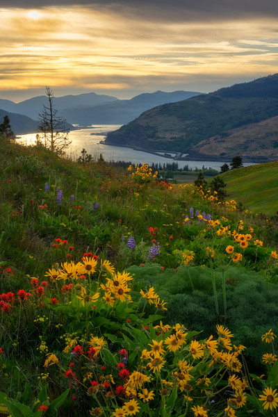 Where Wildflowers flow from Mountain Sides to the River