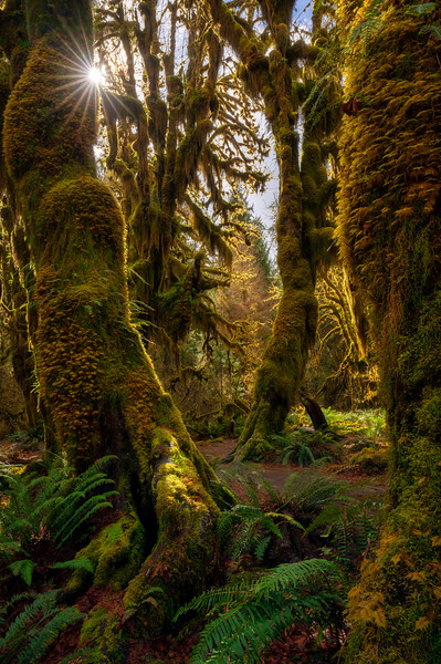 A Burst of Light in a Mossy Forest