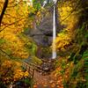 On the Trail to Autumn at Latourell Falls
