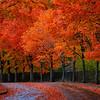 Coulon Park Autumn Boulevard