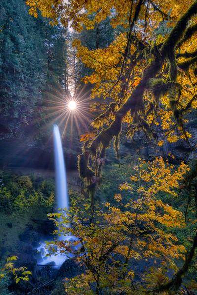 Golden Shower of Light