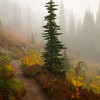 Naches Loop Trail in the Fog
