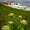 Ecola Flowers for the Morning