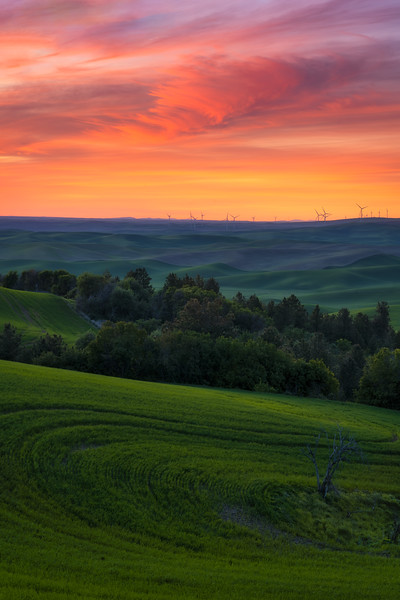 Palouse Visions and Light