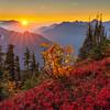 Mount Dickerman Autumn Glory