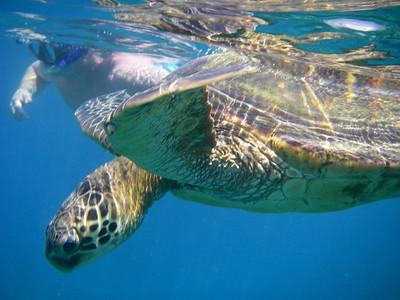 Turtle Town Snorkel 11168