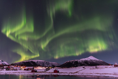 Flying bird aurora borealis
