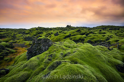 Moss covered lava fields near Vic, Iceland