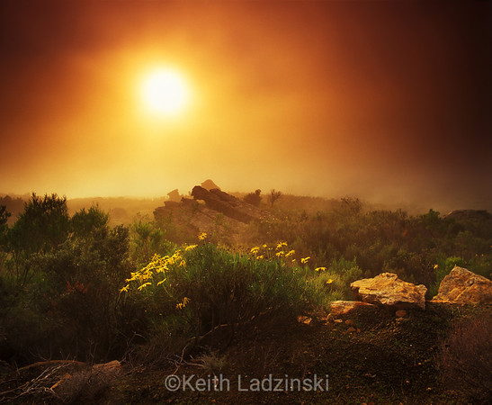 cedarberg wilderness area sunrise, flowers, south africa, pakius pass