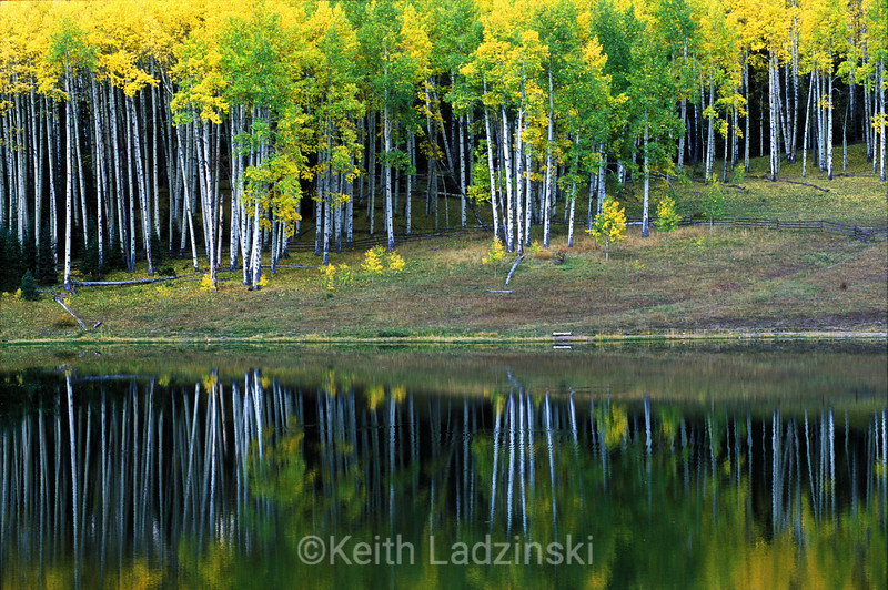 Yellow and green aspen trees reflected in Silver Jack Lake in the San Juan Mountains, Colorado.