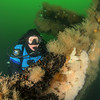 Dive to the Stolt Dagali wreck off the dive boat John Jack, 7/6/13<br /> <br /> Meredith Massey