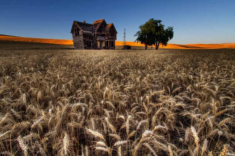 "Abandoned House and Beautiful Wheat<br /> By Brett Downen<br /> <br /> Float Mounted MetalPrint<br /> Available sizes: 4"" x 6"", 8"" x 12"", 16"" x 24"". 24"" x 36"""