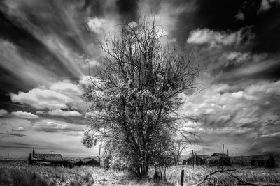 Family Tree High Desert, Oregon By Beverly Downen